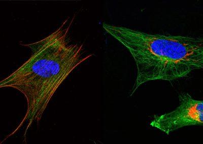 RISK-HUNT3R cell